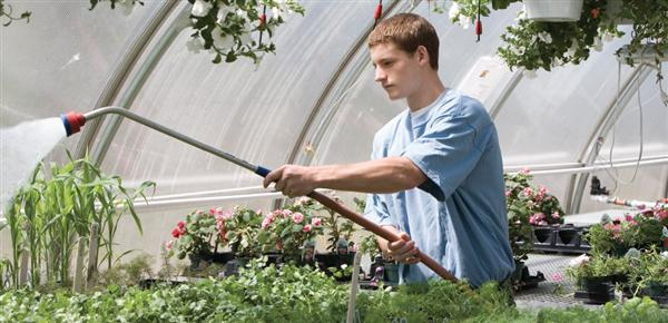 Student waters plants in greenhouse